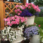 композиция цветы в кашпо