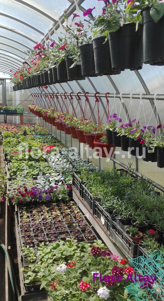 Растения в теплице.