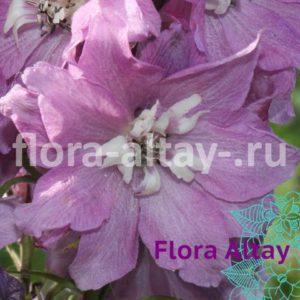 Дельфиниум Magic Fountains Lilac Pink White Bee